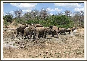 The orphans having fun in the mud wallow