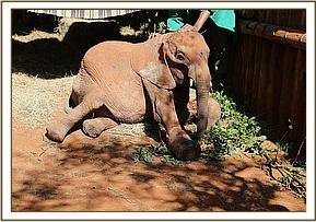 Simotua in his stable not doing so well