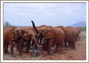 The orphans having an early drink