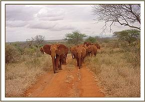 Laikipia leading the orphans