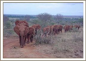 The Voi unit Orphans on their way home