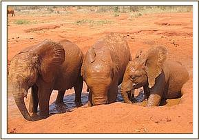 Dabassa left, Rombo and Layoni at the mudbath