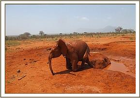 Taveta coming out of the mudbath
