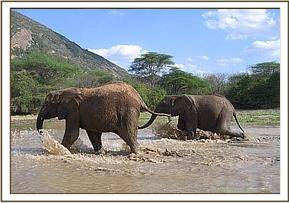 Olmalo and Galana crossing the water