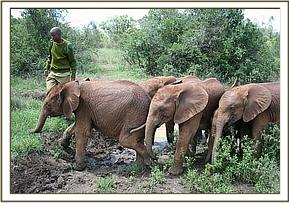 The orphans crossing the muddy puddles