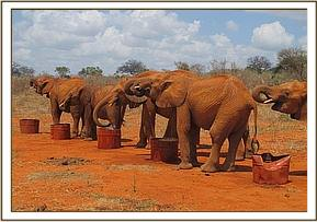 Orphans quenching their thirst on a hot day
