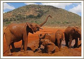 Shimba spraying mud on the others