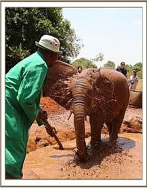 Murera getting ready to spray her human visitors!