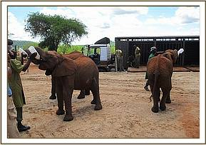 Sities, Turkwel and Kainuk having some milk