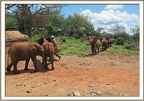 Mutara leading the group to meet the new arrivals