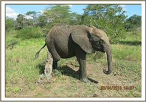 Quanza scratching her body after mud bathing