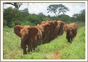 Orphans heading to the waterhole
