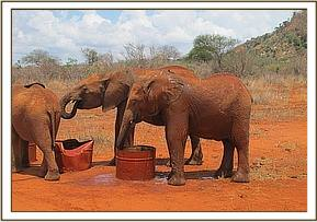 Kenia left and Ndii drinking water