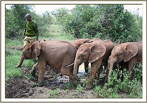 The orphans crossing a muddy patch in the forest