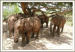 Orphans relaxing in the shade