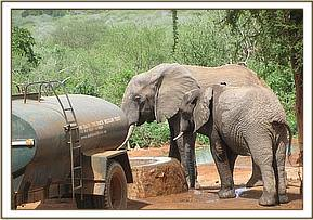 Napasha and wild friend taking water