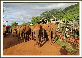The orphans walk past Shimba in his stockade