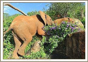 Ndii walking past some wild flowers