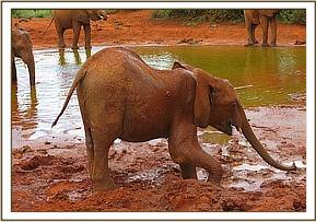Kenia going into the mudbath