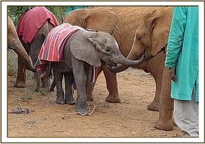 Purai out and about with the other orphans