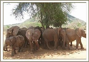 Ex orphans relaxing in the shade