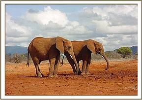 Laikipia & Natumi inspects a dry water hole