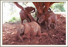 The orphans soil bathing after a mudbath