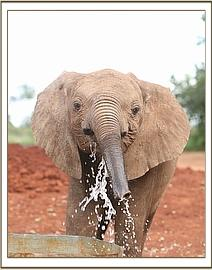 Turkwel splashing water