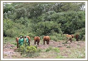 Kihari leading the orphans in from the bush