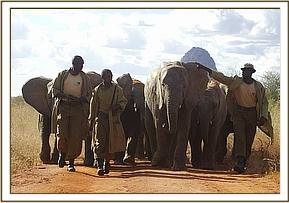 The orphans walking with their keepers