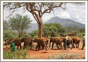 Our orphans with wild elephants behind