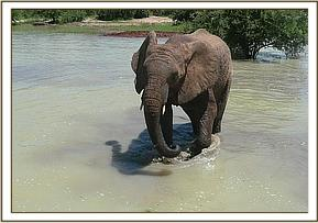 Chyulu in the water