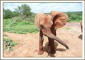 Buchuma swinging his trunk