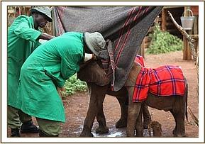 Kithaka and Barsilinga having milk