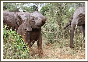 Kihari and the others out in the bush