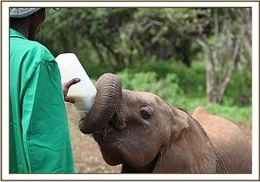 Sonje having milk