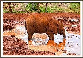 Enkesha on her private mud bath mission