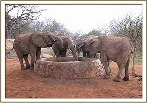 Orphans having a drink in the morning