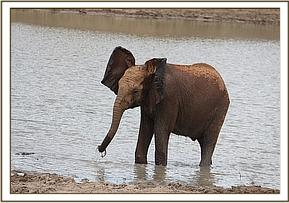 Lemoyian standing in the water