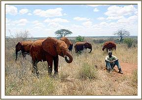 The orphans grazing with a keeper nearby