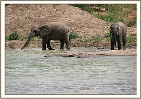 Lenana and Zurura taking water