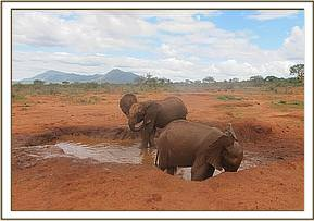 Kivuko and Taveta in the mudbath