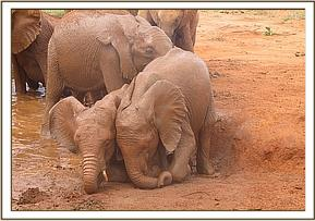 Taveta and Ndii playing together