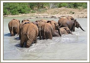 Orphans having a cooling mudbath