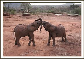 Kithaka playing with Lemoyian