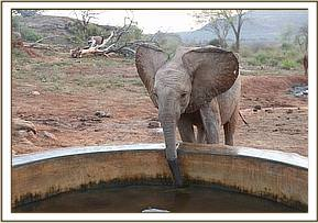 Lemoyian drinking water