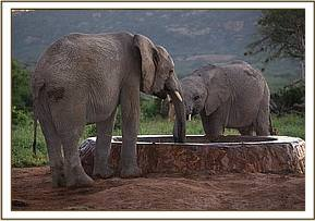 Barsilinga and Boromoko at the water trough