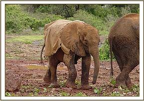Kora with his raincoat on