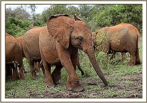 Wanjala came running out of the forest