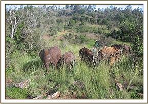 The orphans in the bush browsing